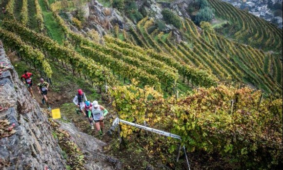 Valtellina Wine Trail 580