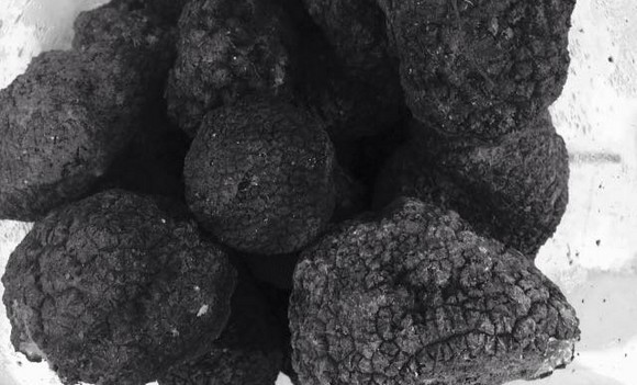 truffle co tartufo nero580a
